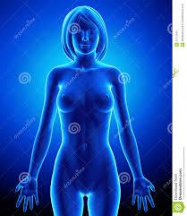 Female Anatomy Organs 68 Female Organs Anatomy Pics Of Internal Female Organs