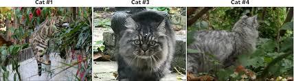 friday cat blogging u2013 13 october 2017 u2013 mother jones