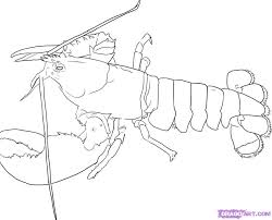 lobster outline 4 wikiclipart
