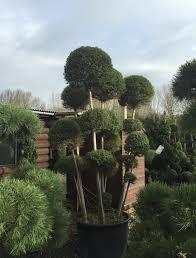 Pom Pom Trees Topiary Cloud Pom Pom Gallery U2014 Crown Topiary