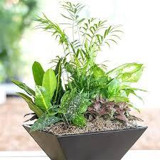 indoor plant arrangements plant arrangement ideas developed hybrid plants and colorful