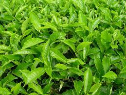 plants on emaze