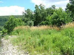 Pennsylvania vegetaion images Reed canary grass floodplain grassland summary jpg