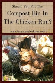 Backyard Chicken Farming by 390 Best Images About Raising Chickens On Pinterest