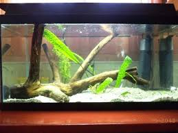 cuisine design en u simple aquarium design ideas cuisine simple aquarium design ideas