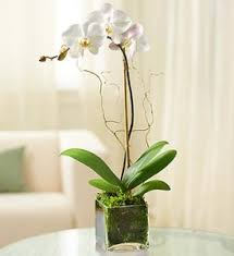 orchid arrangements single orchid in glass cube live orchid arrangement in palm