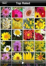 Identify Flowers - muli mobile releases flowerpedia 1 2 iclarified