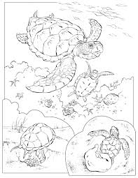 coloring book animals a to i sea turtles turtle and coloring