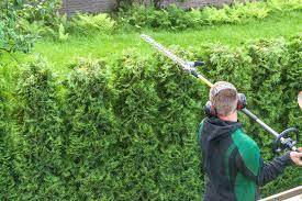 Laurel Topiary - hedges topiary u2013 equinox tree u0026 landscape services