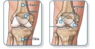 Knee Anatomy Pics Knee Anatomy Mr Peter Moran Mbbs Fracs Faortha