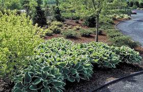 fall garden plans for zone 7 planting a rock garden plants for