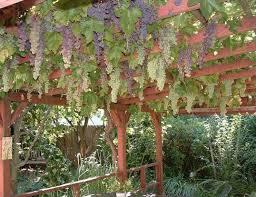Trellis Wine Wine Archives Vineyard Weddings