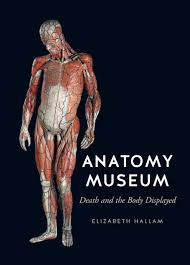 Google Maps Dead Body Anatomy Museum Death And The Body Displayed Hallam