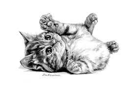 drawn feline artwork pencil and in color drawn feline artwork