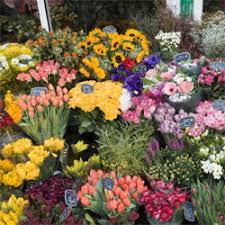 Flower Shops In Greensboro Nc - flower delivery in north carolina send flowers by local florists
