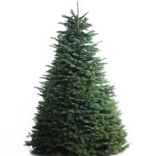 balsam fir christmas tree balsam fir christmas tree delivered