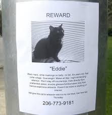Lost Cat Meme - 16 ridiculous lost animal flyers smosh