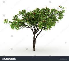 3d render cloves bush tree flowers stock illustration 139095839