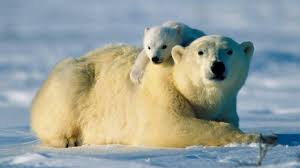 america u0027s greatest animals national geographic channel sub