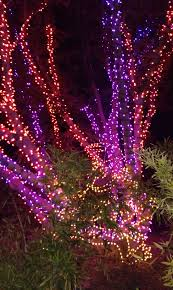 100 zoo lights in az things to do for halloween in phoenix the
