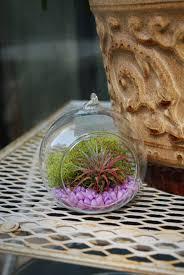 plants peppermints u0026 honey bees