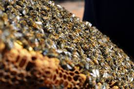 Asia Khan Bad Orb The Queen U0027s Dead Long Live The Queen Asian Honey Bees Are