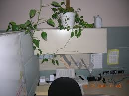 What Plants Are Cubicle Friendly by The Cubicle Vagabonding Life