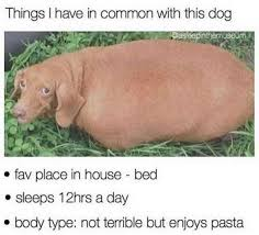 Dog In Bed Meme - dopl3r com memes things i have in common with this dog