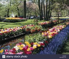 flowers garden city visitor flowers keukenhof spring garden holland lisse people
