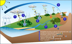 cool trees trees forests and water cool insights for a world u201d carbon