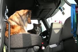 australian shepherd utah rescue puppy mill rescue story best friends animal society