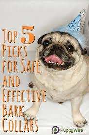 Radio Collar For Beagle Best 25 Bark Collar Reviews Ideas On Pinterest Sheer Number