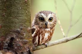 online pics of an owl 34 with additional to print with pics of an