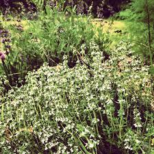 native missouri plants creating beautiful flower arrangements from herbs u0026 native plants