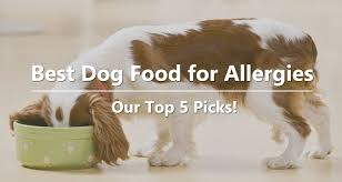 best dog food for allergies our top 5 picks