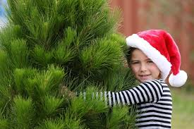 places to buy a christmas tree in oklahoma city