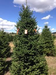 g u0027s christmas trees christmas trees wreaths xmas tree