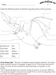 bat activity sheets label a little brown bat beginner