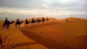 camel images pexels free stock photos
