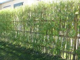 aesthetic bamboo fencing ideas for yard parting and decor