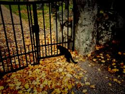 scary cat photo halloween old fall autumn church antique witch