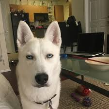 Annoyed Dog Meme - dogs who have mastered the art of resting bitch face