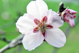 google images flower 2048 fruit flower