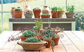 home interior plants houseplants enjoy the garden indoors telegraph