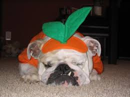 funny pet halloween costumes tips for creating an online store