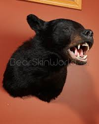Taxidermy Bear Rug Buy Taxidermy Mounts For Sale Life Size Wildlife Mounts
