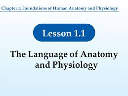 Human Anatomy And Physiology Chapter 1 1 Foundations Of Human Anatomy And Physiology Lesson 1 1 The