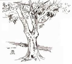 sketch of a tree with leaves archives pencil drawing collection
