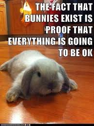 Funny Rabbit Memes - funny rabbit memes one lop too many