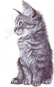 best 25 cat sketch ideas on pinterest cat reference how to